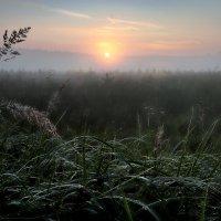Холодный рассвет августа.... :: Андрей Войцехов