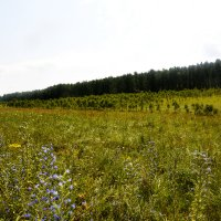 Открывается поляна... :: Дмитрий Петренко