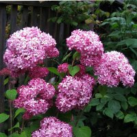 Красота в саду :: sm-lydmila Смородинская