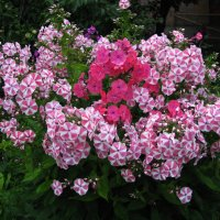 Разноцветье :: sm-lydmila Смородинская