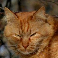 Сердитый кот :: Ольга Попова (popova/j2011)