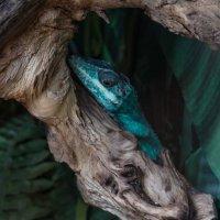 Голубая ящерица :: Любовь Клименок