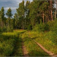 Август в Подмосковье 2 :: Андрей Дворников