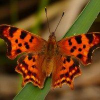 о бабочках 3 :: Александр Прокудин
