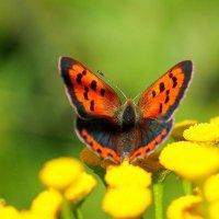 о бабочках 5 :: Александр Прокудин