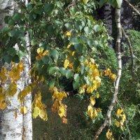 Еще не осень, но уже не лето :: Фотогруппа Весна - Вера, Саша, Натан