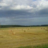 На полях Беларуси :: Виктор Мухин