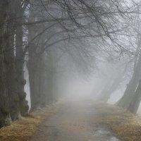 Весенний променад...... :: Юрий Цыплятников