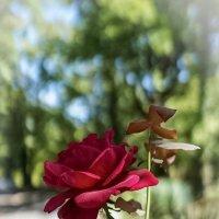 Капризный цветок:) :: Павел Печковский