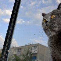 Леопольд на Балконе... :: Дмитрий Петренко