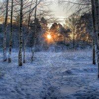 Морозное утро :: Cергей Щагин