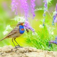 Песни цветущего луга :: Влад