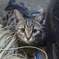дикий кот :: Марина Итина