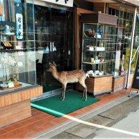 Остров Миядзимa Япония :: Alm Lana