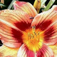 сердце цветка :: Sabina
