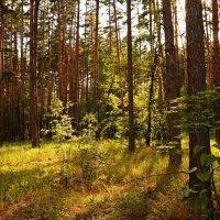 В лесу :: София