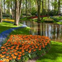 Парк Кёкенхоф в Голландии :: Валерий Штеба