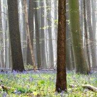 Весна... :: Elena Ророva