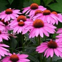 Цветы. :: Julia Nikolina