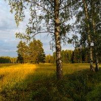 Август...скоро осень :: Олег Бабурин