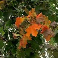 На пороге осень... :: Елена