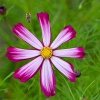Цветок :: Олег Баламатюк