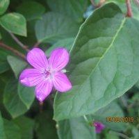 Цветок :: Maikl Smit