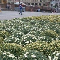 """""""Цветочный джем"""" - оформление клумб на площади :: Galina194701"""