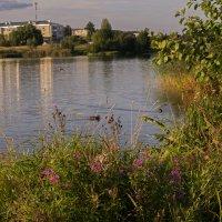 У озера :: Владимир Ефимов