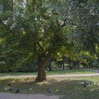 В  тени дерева :: Валентин Семчишин