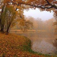 Туманное утро... :: Наталья