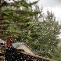 На охоте после дождя :: Сергей Коваленко