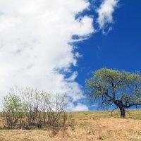 Земля и небо :: Дмитрий Назаренко