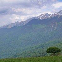 Дерево на краю :: Дмитрий Назаренко