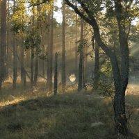 Утро в лесу :: Павел Дунюшкин