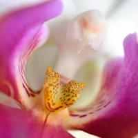 Одичавшая орхидея. :: Павел Сущёнок