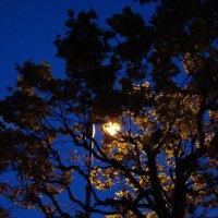 Ночное солнышко :: Yuliya Yugina