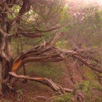В сказочном лесу... :: Ирина Рассветная