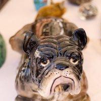 Bulldog :: Alex Podobaev