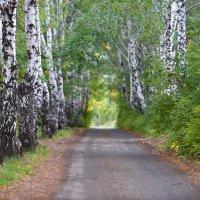 дорога в осень ... :: Maxxx©