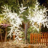 Magic Tree :: Arslan Brown