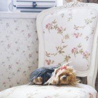 Собака на стуле :: Мария Орлова