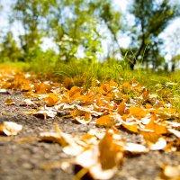 Осень :: Katrin Chag