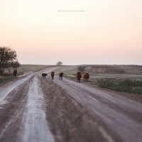 Дорога в деревню :: Ирина Цой