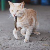 Кот и рыба :: Ирина Цой
