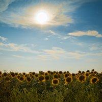 солнечная долина :: Виктория Гринченко