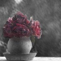 Розы.Дождь. :: Светлана Данилюк