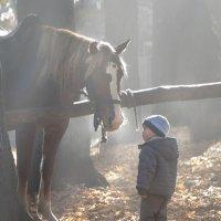 Мальчик и лошадь. :: Светлана Данилюк