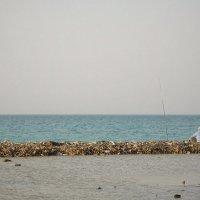 Рыбах с двух островов :: Александр Жданов
