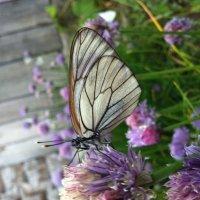 Бабочка :: Виктория Тихонова